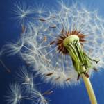 Test na alergie wziewne